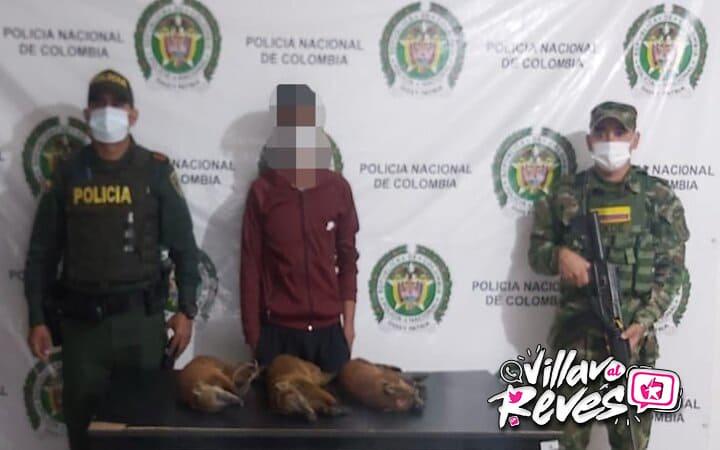 Detenido por la caza ilegal de tres cusumbos o coatíes en Vista Hermosa - Noticias de Colombia