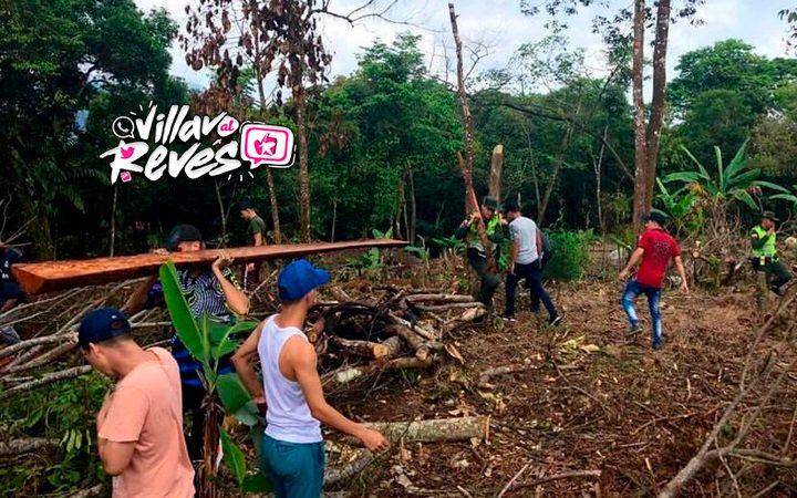 Prisión de 5 a 15 años por causar deforestación o tráfico de fauna - Noticias de Colombia